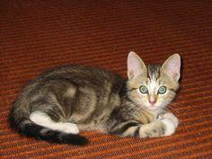 tiny Kiko, big ears *IA