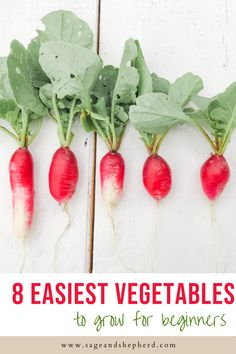 Starting a vegetable gardens? Learn about the top 8 easiest vegetables to grow in your vegetable garden for beginners. Starting A Vegetable Garden, Vegetable Garden For Beginners, Gardening For Beginners, Gardening Tips, Easy Vegetables To Grow, Homestead Gardens, Garden Pests, Small Farm, Grow Your Own Food