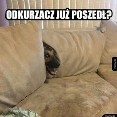 20 Best Funny Animal Photos for Sunday Night. Serving only the best funny photos in 2019 that will help you laugh today. Wtf Funny, Funny Dogs, Cute Dogs, Funny Memes, Hilarious, Funny Animal Photos, Funny Photos, Funny Animals, Cute Animals