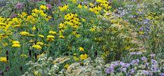 Ecologische bedrijfstuin op industrieterrein- Ecological company garden on industrial area. Prairie Garden. Locatie: Geelen Counterflow Haelen NL Ontwerp: Iverna Zaalberg Natuur bij huis 2014/2015 Foto: 2016-08 ©Natuurbijhuis