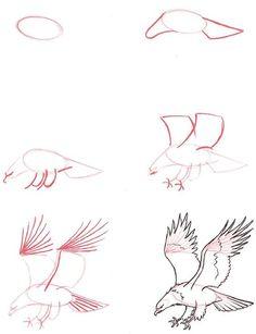 Hoe teken je een arend: