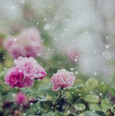 Raindrops on roses...