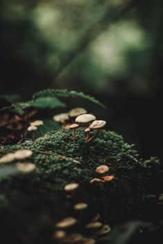 Beautiful Nature Forest Photography Ideas For 2019 Magical Forest, Dark Forest, Foggy Forest, Forest Photography, Macro Photography, Winter Photography, Levitation Photography, Beach Photography, Abstract Photography