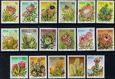 South Africa 1977 Proteas and Succulents Set Fine Used SG 414 30 Scott 475 91 Condition Fine Used Only one post Flower Stamp, African Animals, Handmade Books, African History, Stamp Collecting, Map Art, Trees To Plant, Postage Stamps, Beaches In The World