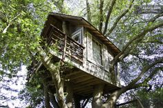 San Francisco Tree House on Airbnb