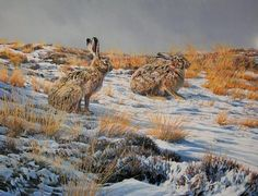 golden-hares by Martin Ridley