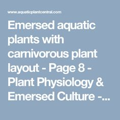 Emersed aquatic plants with carnivorous plant layout - Page 8 - Plant Physiology & Emersed Culture - Aquatic Plant Central