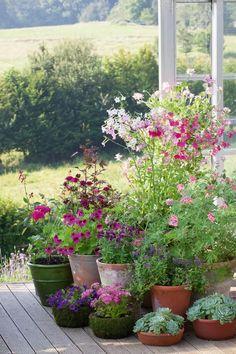 Container gardening summer   House & Garden Summer House Garden, Garden Cottage, Garden Pots, Balcony Gardening, Garden Ideas, Potted Garden, Big Garden, Flower Gardening, Garden Table