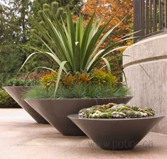 Potted Flowers Exterior Design Ideas, Pictures, Remodel and Decor