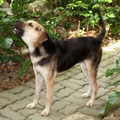 In Thailand, thousands of unwanted dogs are abandoned at Buddhist temples and monasteries every year. The monks are willing to take care of the dogs but can't afford the veterinary care or dog food they need. Help save these dogs ---> https://theanimalrescuesite.greatergood.com/store/ars/item/55314/discarded-dogs-need-your-help?origin=ARS_FACE_GGO_GTGM_TEMPLEDOGS_55314_112913