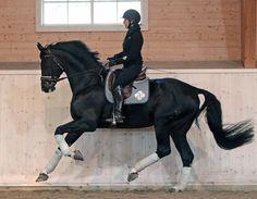 Equestrian: Dressage