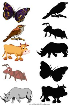 Reasoning skills. Questioning: Why isn't this a butterfly? How do you know this silhouette is of a rhino? etc