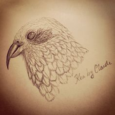 A quick sketch in a rainy day by Claude #NZ #Kiwibird #kea #Aotearoa #kiwiart #NZbird #nature #bird #sketch #pencilart #art NewZealand #design #drawing