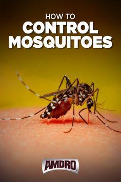 Mosquito Larvae, Mosquito Repelling Plants, Diy Pest Control, Mosquito Control, Fly Deterrent, Backyard Projects, Diy Projects, Mosquito Yard Spray