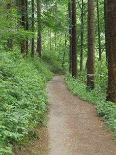 walking paths - Google Search