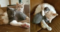 Stray Kitten Surprises Family When She Walks Up to Their Cat and Makes Him Her New Dad...