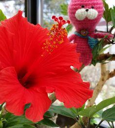 北海道でも温室だらハイビスカス #ハイビスカス#hibiscus #amigurumi #hokkaido #handmade #greenhouse #温室#cat #編みぐるみ#北海道 #猫 by techi__techi