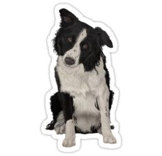 Digitally hand painted Border Collie dog. • Also buy this artwork on stickers, apparel, phone cases, and more.