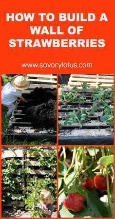 How to Build a Wall of Strawberries.  An awesome idea to grow strawberries in a small backyard.