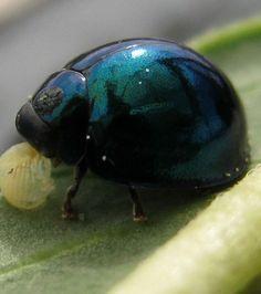 Découvrez 20 extraordinaires animaux bleus, une couleur rare dans le règne…