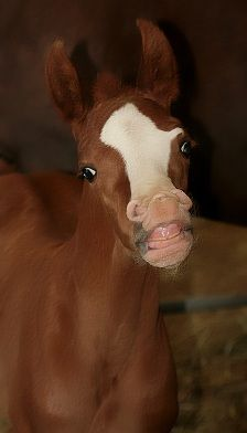 Adorable! You can't resist a cute foal:)