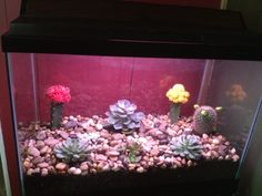 use an old fish aquarium to plant an indoor rock garden. cover base of aquarium with soil, plant succulents, then fill in with rocks. very cute when lit with aquarium light!