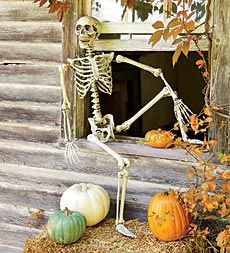 Just bought from Kmart online it was the cheapest. Poseable skeleton. life-sized-halloween-skeleton (plowhearth.com)