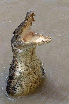 Never smile at a crocodile.