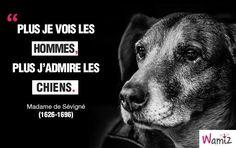 """""""Plus je vois les hommes, plus j'admire les chiens"""" - Madame de Sévigné"""