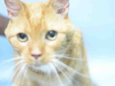 """RAYMOND - A0535498 - - Brooklyn  ***TO BE DESTROYED 07/06/17*** FRIENDLY RAYMOND WAS RETURNED AND NOW LISTED!! Raymond is no stranger to the shelter environment. He was adopted from her several years ago. His owners are surrendering him because they have """"no time"""" for him. Please help right this wrong and consider opening up your home to RAYMOND so he can spend the rest of his golden years surrounded by love.  Raymond is good with kids and AVERAGE rated –"""