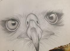 Pencil drawing. Chloe worswick