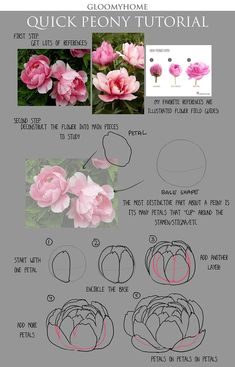 How To Draw A Peony Drawn Peony Base – Pencil And In Color Drawn Peony Base