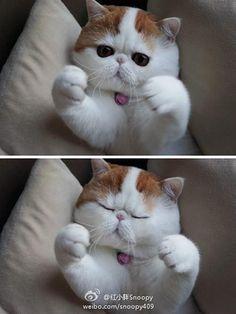 I will hug him til his head pops off!! So cute!