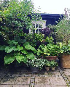 garden pots Garden, Lavender garden, P - gardencare Small Courtyard Gardens, Rustic Gardens, Small Gardens, Outdoor Gardens, Outdoor Sheds, Garden Cottage, Garden Pots, Garden Sheds, Herb Garden