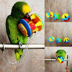 Bird Ball To Would need to change the clip on the toys chain though because it can be dangerous if their beak got stuck in it