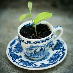 love the idea of plants in vintage china.