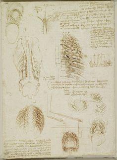 The thoracic and abdominnal cavities of an ox Leonardo da Vinci (Vinci 1452-Amboise 1519)   #TuscanyAgriturismoGiratola