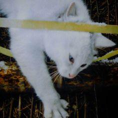 #愛#愛猫#ぬこ部 #ぬこ様 #日常#スナップ写真 #スナップ#アート #japan #写真家 #写真好きな人と繋がりたい #写真好きの人と繋がりたい #写真撮るの好きな人と繋がりたい #ねこ好きさんと繋がりたい #ねこ#猫写真 #猫 #ねこ部##野良猫#のらねこ #のらねこ部 #photo #cats #cat #neko  みかんの街に来てますがまだ、爆睡中出す😃🐱(*´∀`)たたき起こしたろうかなあ(笑)