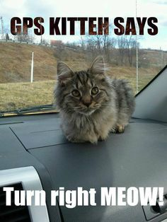 Turn right NOW!... er, MEOW!