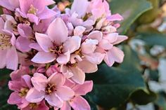 15 Low-Maintenance Shrubs - This Old House Fast Growing Hedge Plants, Fast Growing Flowers, Summer Flowers, Pink Flowers, Rain Garden Design, Small Evergreen Shrubs, Plants That Repel Bugs, Landscaping Shrubs, Landscaping Design