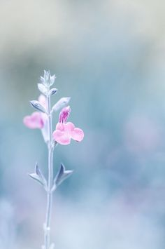 Bokeh ✿⊱╮ by VoyageVisuel Simply Beautiful, Beautiful Flowers, Amazing Grace, Colorful Flowers, Bleu Pastel, Jolie Photo, Gras, Flower Images, Color Of The Year
