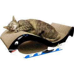 Some #cat has made a catch today: a big large #Orca #Whale. After slaying it she rested on him. Cute kitty #bed for $22