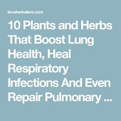 10 Plants and Herbs That Boost Lung Health, Heal Respiratory Infections And Even Repair Pulmonary Damage - I Love Herbalism