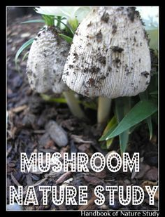 Handbook of Nature Study: Outdoor Hour Challenge - Mushroom Nature Study with free printable Mushroom Cap notebooking page for your nature journal.