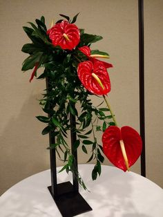 Modern anthurium arrangement