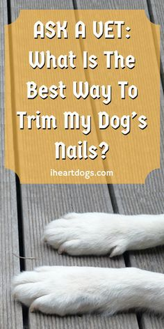 Having trouble trimming your dog's nails? This will help!