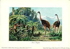 Antique print: Moa with ancient Maori hunting them - Moa-Vogel from Dinosaurs and Prehistoric Animals from Tiere der Urwelt by Heinrich Harder