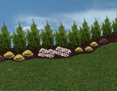 Privacy Landscaping Trees | Privacy Trees and Hedges, in the Landscape