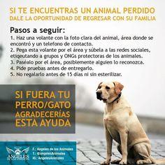 Si te encuentras un animal perdido dale la oportunidad de regresar con su familia.  Importante información compartida por @angelesdelosanimales  #PetsWorldMagazine #RevistaDeMascotas #Panama #Mascotas #MascotasPanama #MascotasPty #PetsMagazine