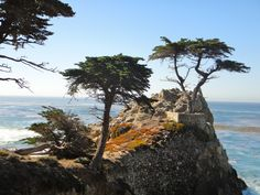 Lone Cypress, Monterey California - Surrounded by beauty. Need to ride our bikes in Pebble more often.